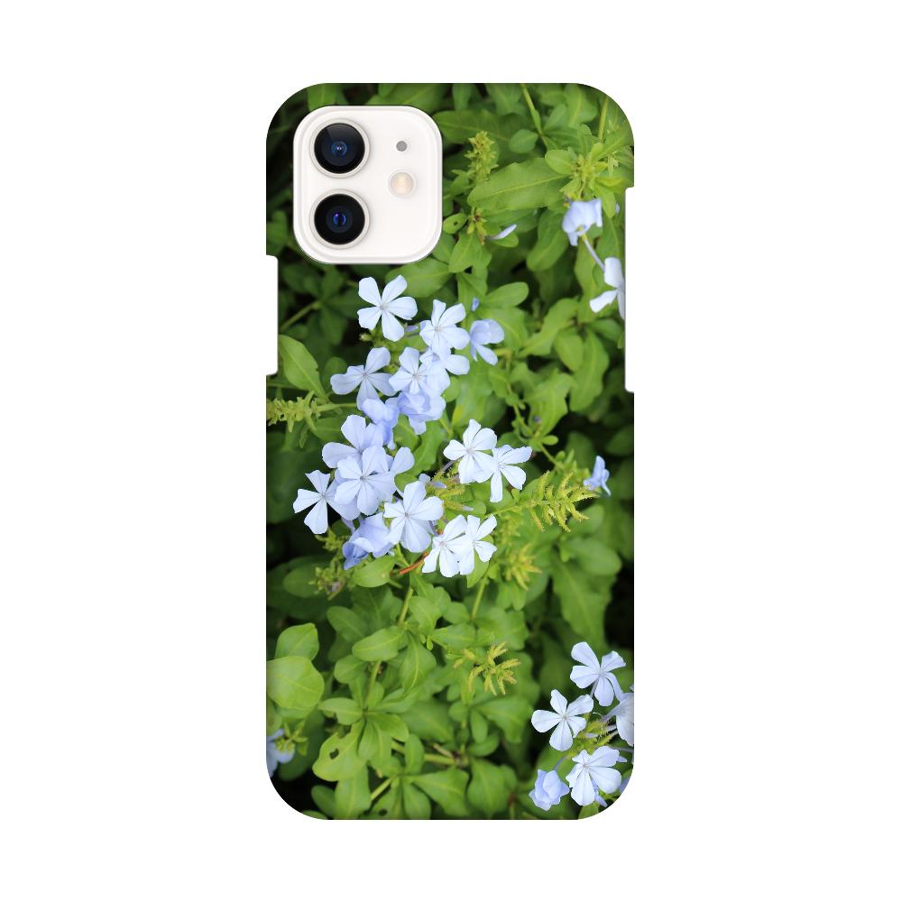 iPhone12 / 12 Pro [プルンバゴ(ルリマツリ)] 植物写真 #0002 iPhone12 / 12 Pro