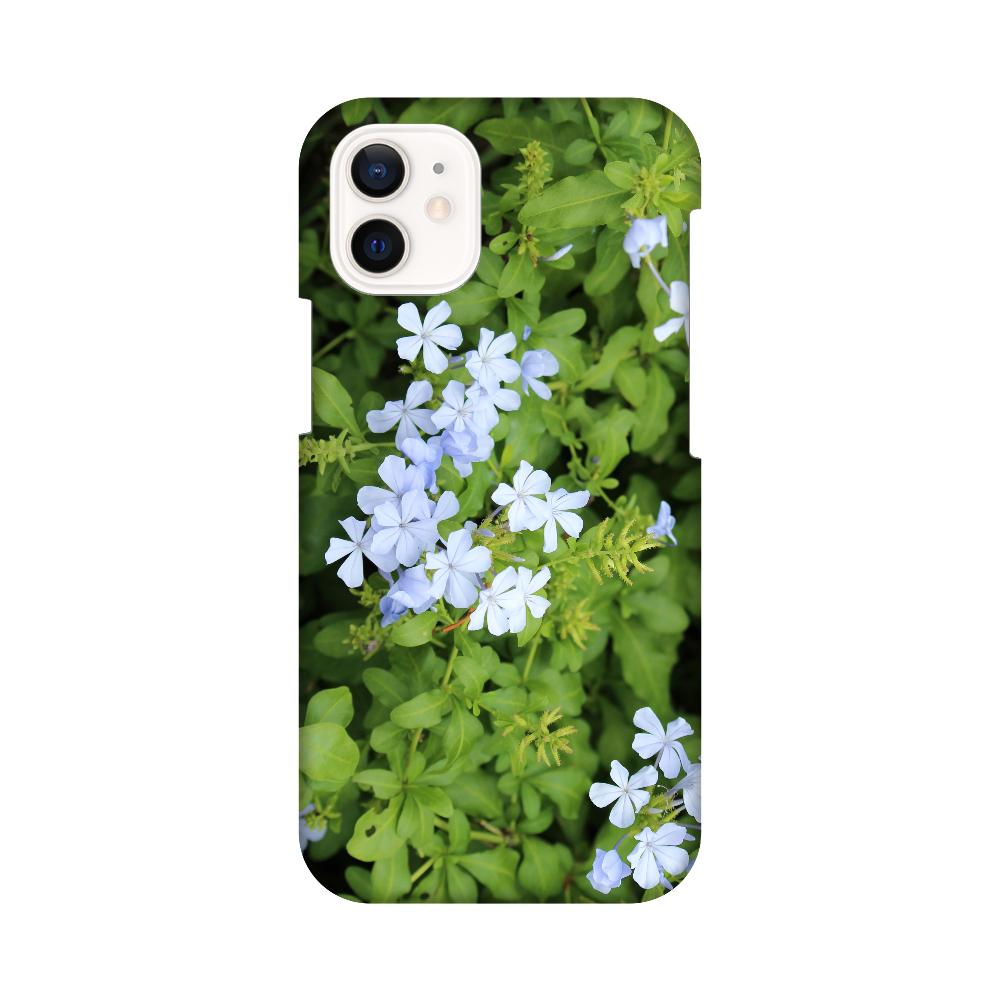 iPhone12 mini [プルンバゴ(ルリマツリ)] 植物写真 #0003 iPhone12 mini