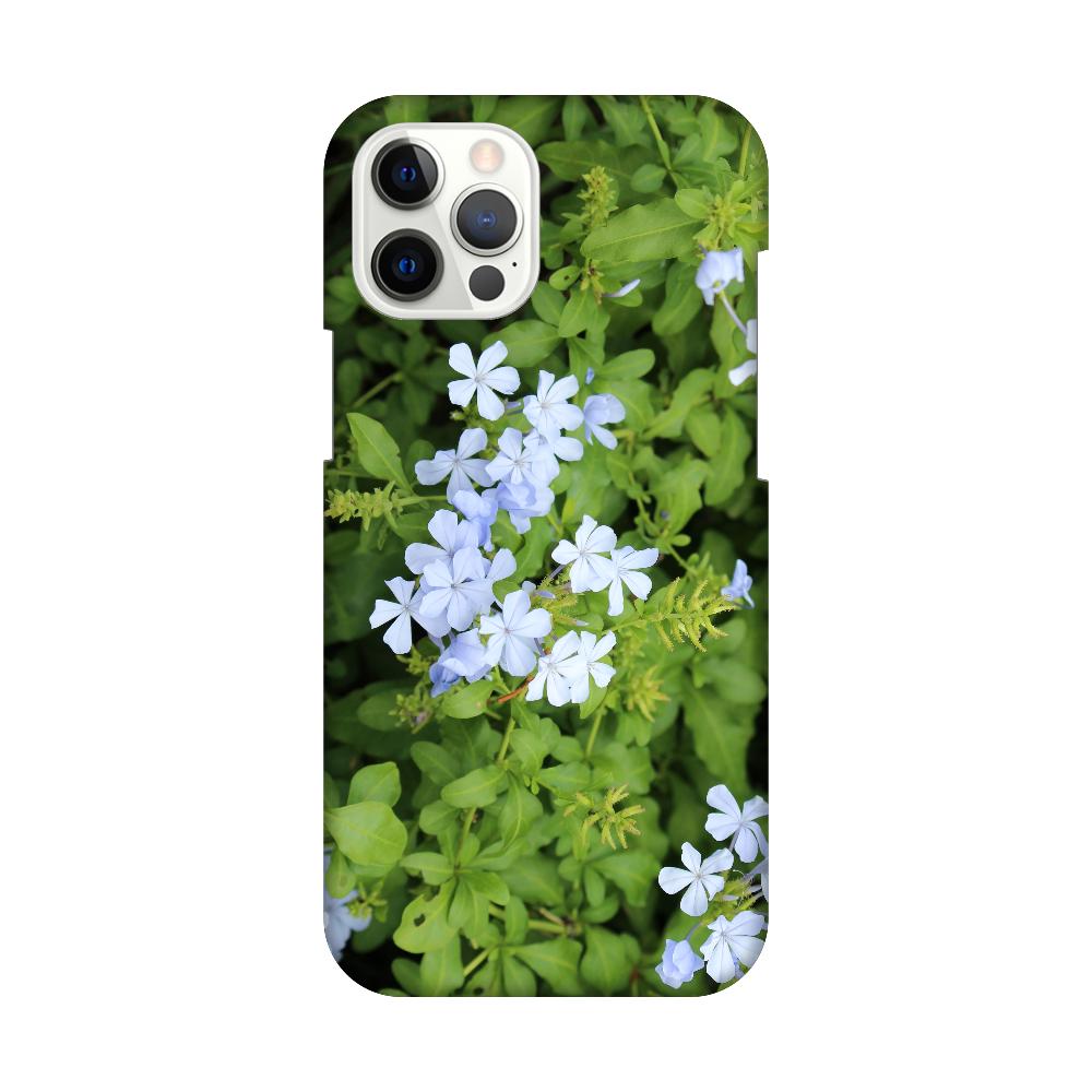 iPhone12 Pro Max [プルンバゴ(ルリマツリ)] 植物写真 #0004 iPhone12 Pro Max