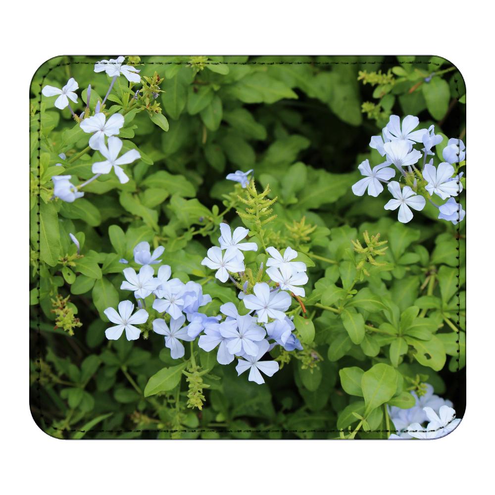 レザーマウスパッド [プルンバゴ(ルリマツリ)] 植物写真 #0001 レザーマウスパッド(スクエア)