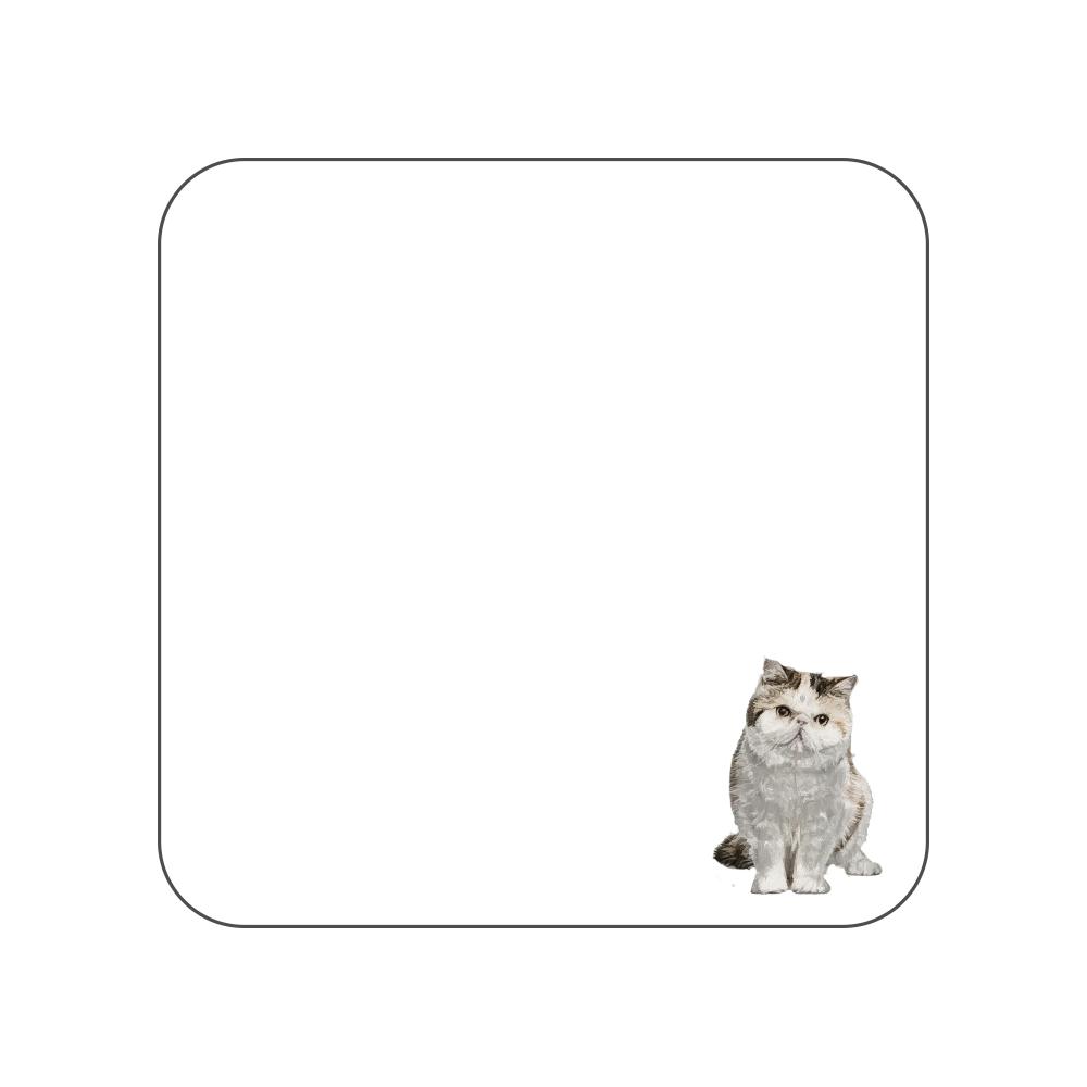 エキゾチックショートヘア猫のタオルハンカチ ホワイト 全面プリントハンカチタオル