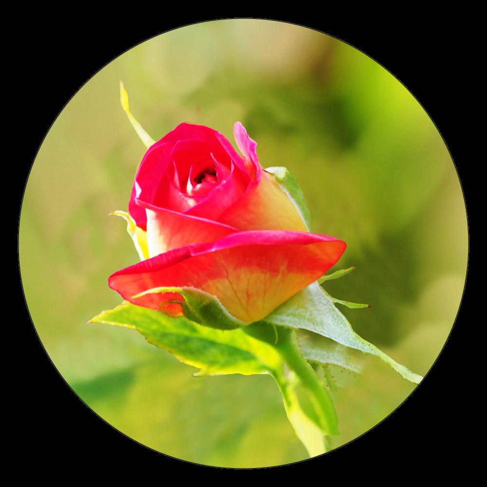 fleur-02 白雲石コースター 丸