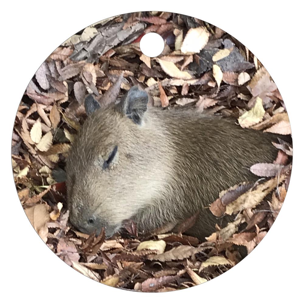 落ち葉で寝てる赤かぴ キーホルダー レザーキーホルダー(丸型)