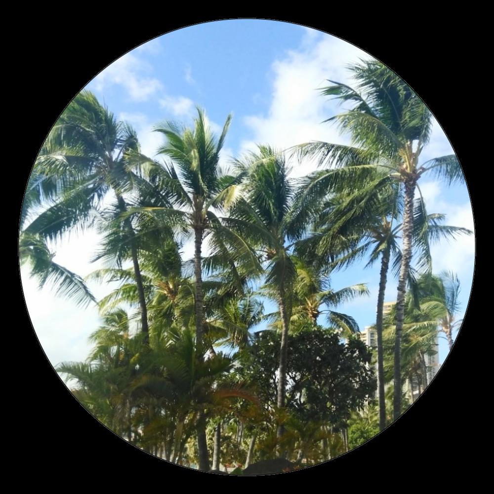 ハワイを満喫【コースター】 白雲石コースター 丸