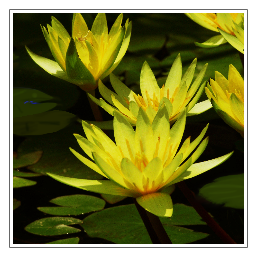 fleurs-08 アクリルブロック