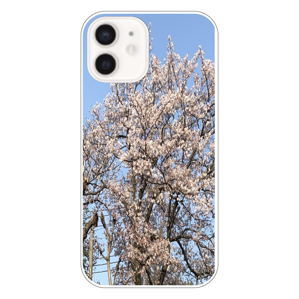 3年前に撮影した桜 スマホケース iPhone12