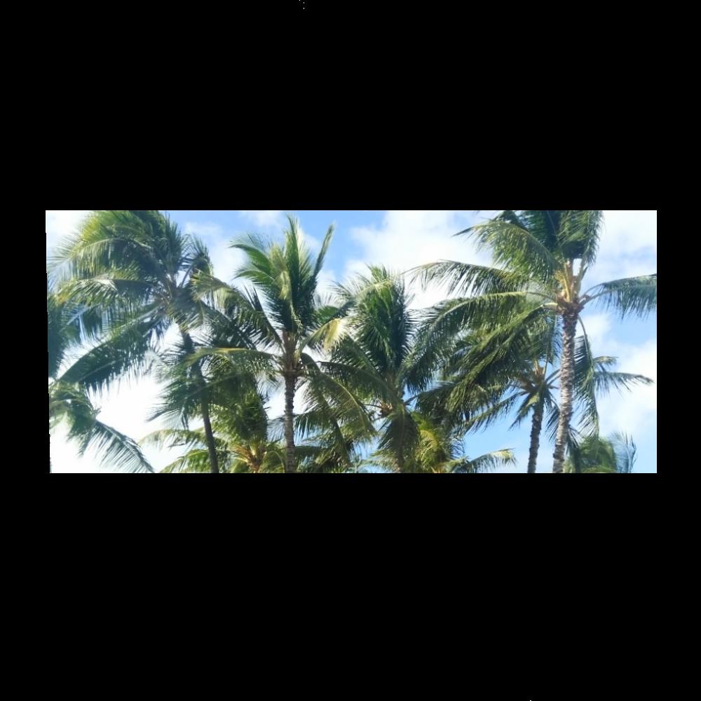 ハワイを満喫【タオル】 全面インクジェットフェイスタオル