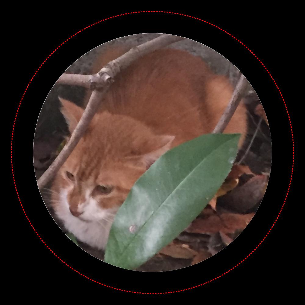 とある日の猫① オリジナル缶バッジ(44mm)