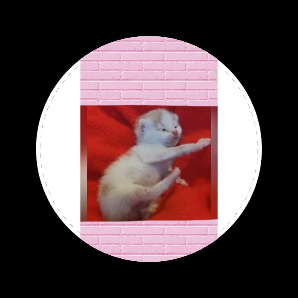 仔猫 56㎜缶バッジ
