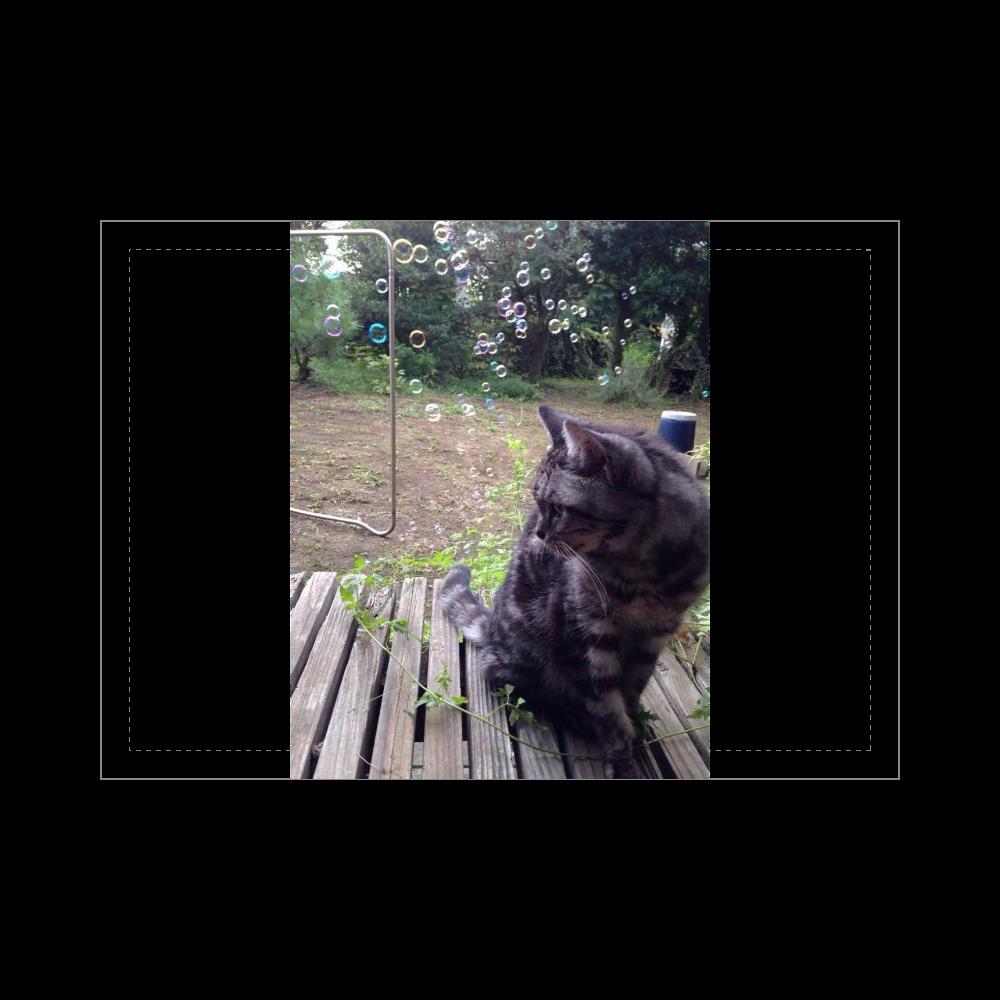 猫・おはるさん ブランケット - 700 x 1000 (mm) - ポリエステル