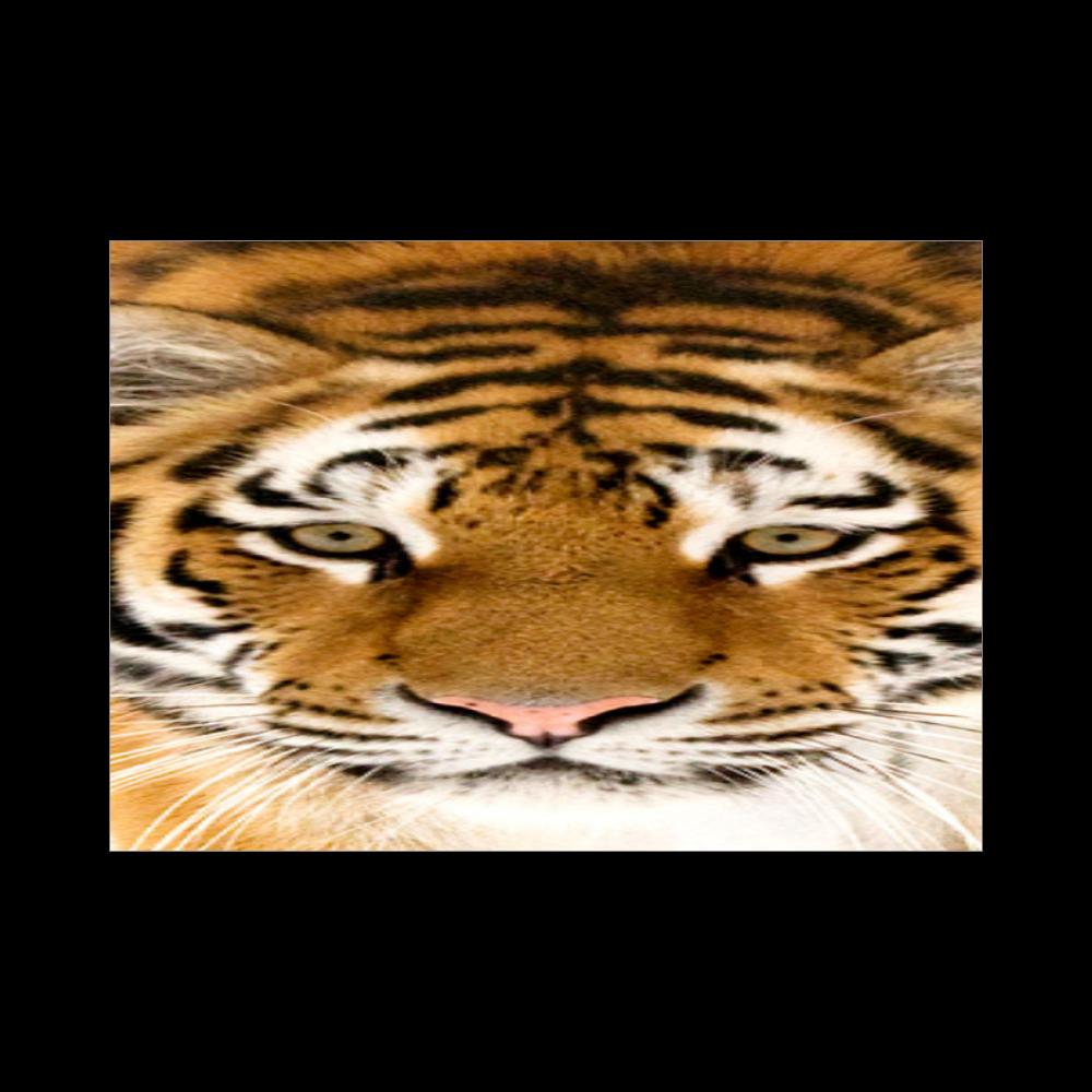 TIGER ブランケット - 700 x 1000 (mm) - ポリエステル