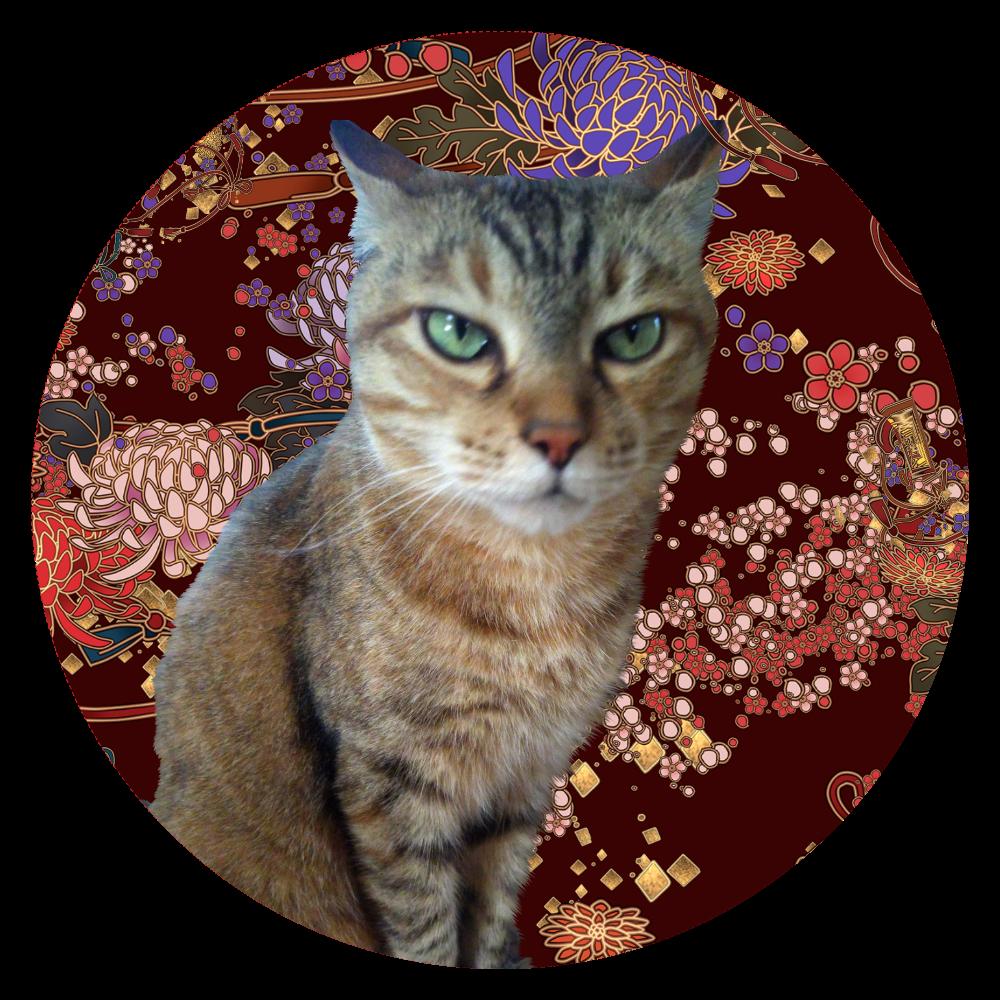 キジトラ猫が遊んでほしそうにしています  44㎜缶バッジ