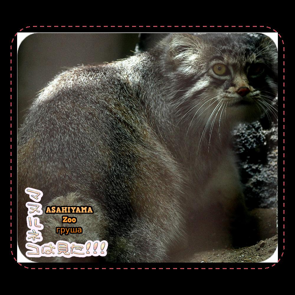 マヌルネコ「グルーシャ」(旭山動物園)マウスパッド レザーマウスパッド(スクエア)