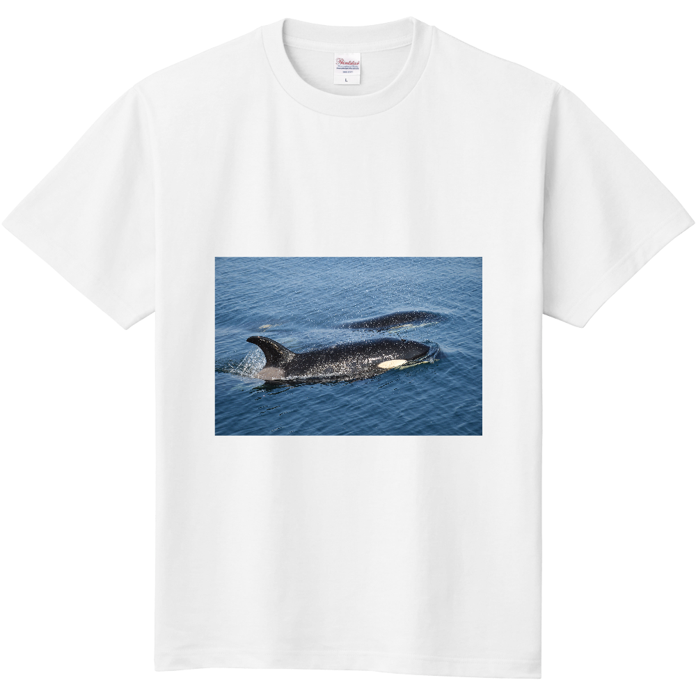 シャチ 定番Tシャツ