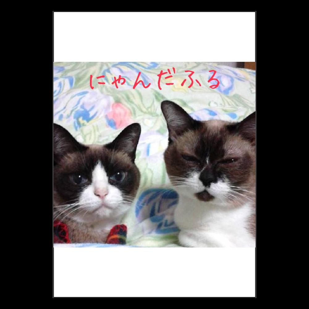 ★にゃんだふる★ ポスター A2サイズ